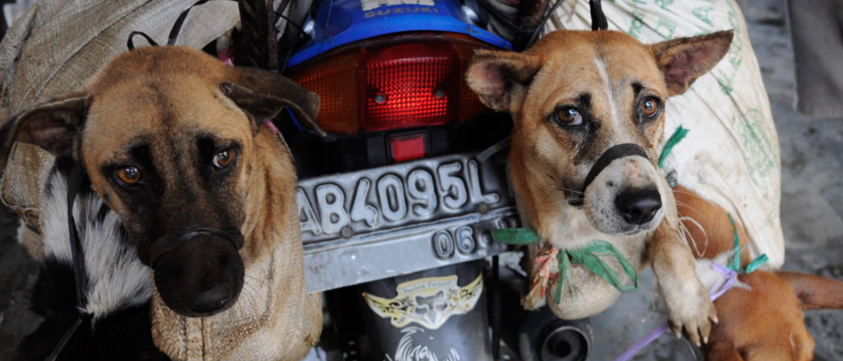 DOG MEAT FREE INDONESIA (DMFI)